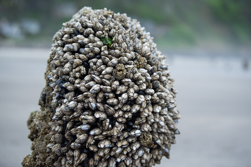 the top of a tree stump covered in barnacles and mussels