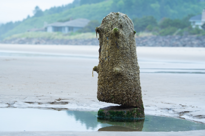 A tree stump on a beach with a green hill behind it