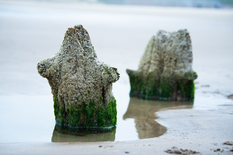 Two tree stumps on a beach