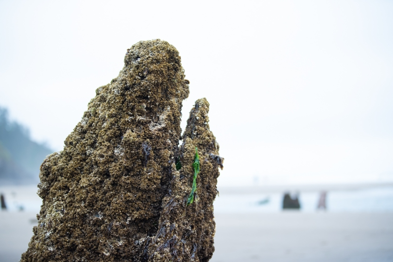A tree stump rises out of the beach