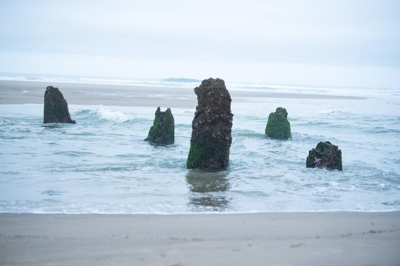 ghost tree stumps in the ocean